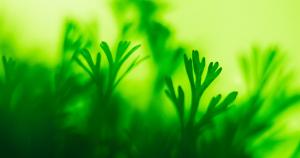 substances naturelles bioactives - filtration membranaire