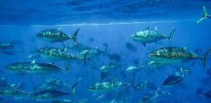 Outil économique pêche - fluctuation des prix
