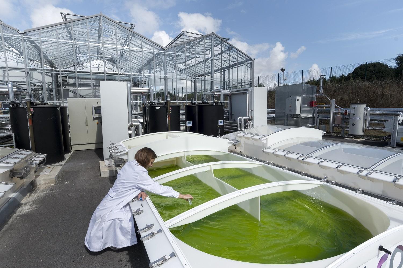 Utiliser des microalgues pour valoriser du CO2 en biomatériaux et biocarburants troisième génération-CAPACITES-SARA